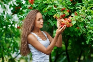 8371651-beautiful-woman-picking-guelder-rose-berries