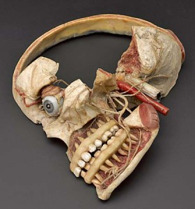 Wax anatomical model of female human head showing internal struc