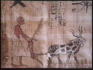 farming_plow___egypt