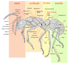 ant parts