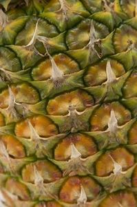 article-new-ehow-images-a07-k4-d6-ants-pineapple-plants-800x800