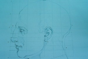 head proportions