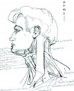 muscles neck